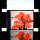 J.Mekas. Frozen frames. 210